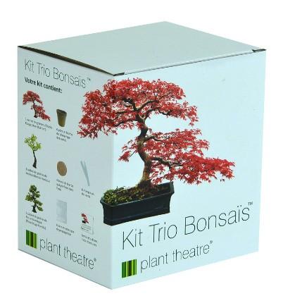 Bonsai Trio, Kit Per La Coltivazione Di 3 Bonsai